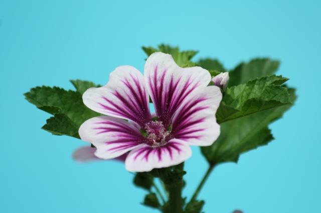 Flowers 2013 007