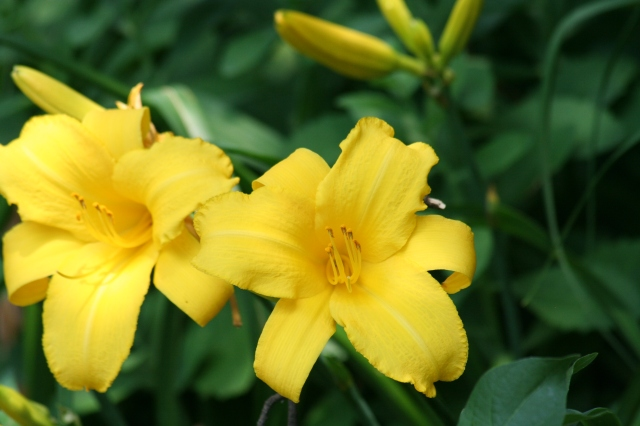Flowers 2013 011 - Copy